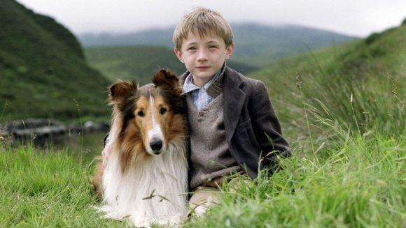 Rase de câini care iubesc oamenii mai mult decât câinii
