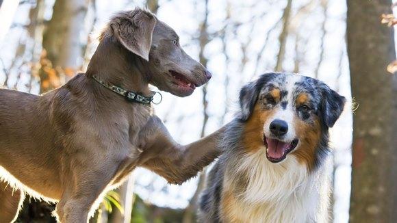 Top 14 cele mai drăgălaşe corcituri canine din lume