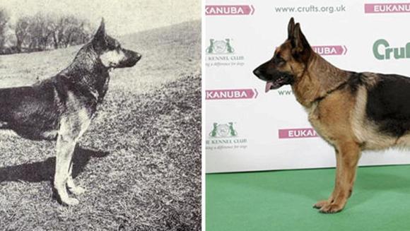 Cum s-au schimbat rasele de câini în ultimii 100 de ani