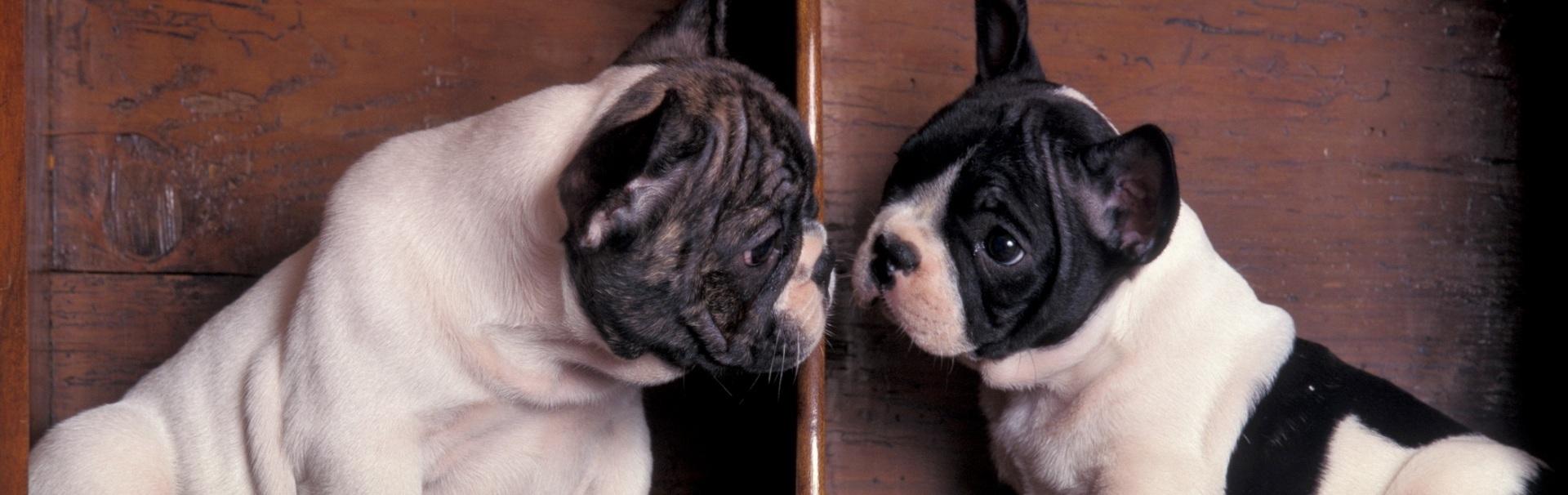 Cele mai bune rase de câine pentru stăpâni prea ocupați