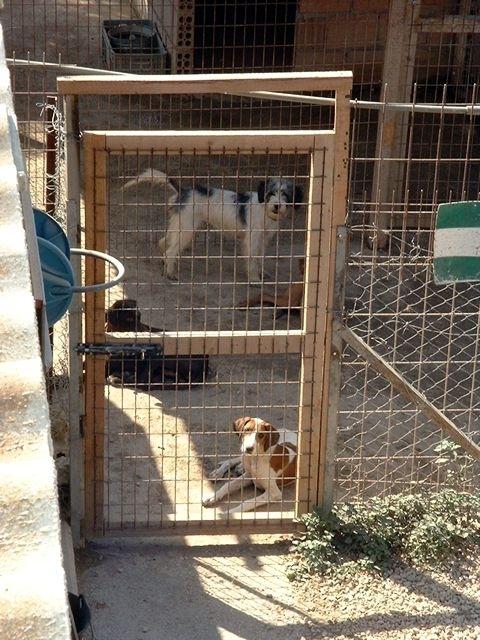 Condamnati pentru dragoste fata de animale
