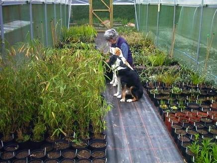 Feriti cainele sa manance plante