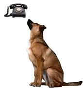 In Coreea de Sud ati putea vorbi cu cainele la telefon