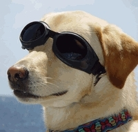 Ochelari de soare pentru caini