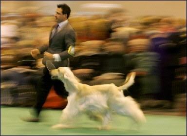 Mai mult de 20000 de caini la cel mai mare concurs canin din lume