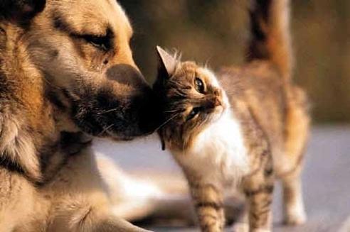 Diabetul zaharat la caine si pisica