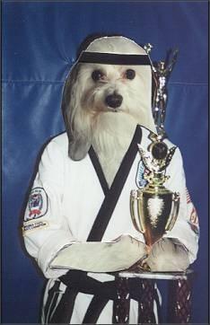 Karate Dog, o noua comedie marile ecrane