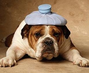 Sanatatea cainelui tau. Administrarea medicamentelor