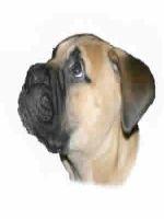 Polite de asigurare pentru caini