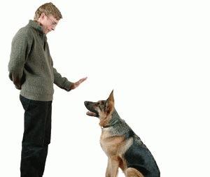 Educarea cainelui. Comenzile