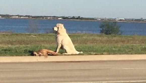Emoționant: gestul făcut de un câine pentru prietenul său căzut la pământ
