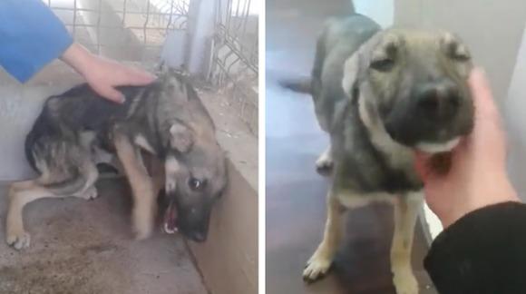 Cum reacţionează un câine abuzat, când este mângâiat (Opriţi sunetul dacă sunteţi sensibili) - VIDEO