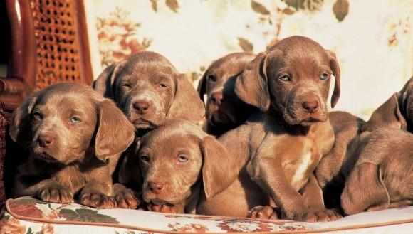 Top 100 cele mai populare nume de câini, în 2015