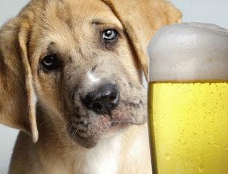 Cainele nu are voie alcool!