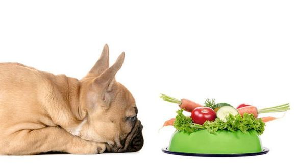 5 fructe si legume toxice pentru câini