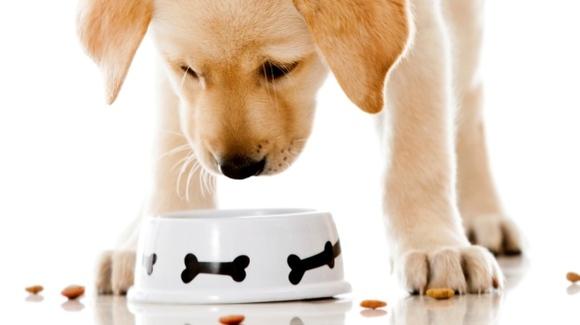 Cum să depozitezi corect mâncarea câinelui tău