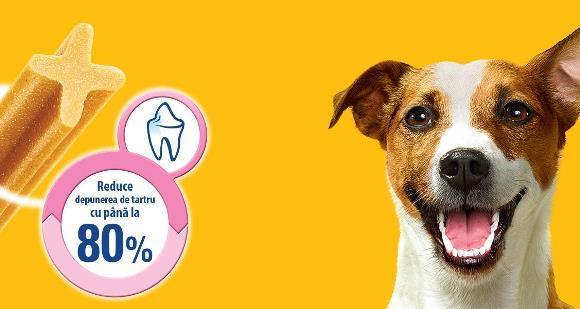 Știai că....  4 din 5 câini cu vârsta de peste 3 ani suferă de afecțiuni ale dinților și gingiilor cauzate de depunerile de placă și tartru? - Galerie foto