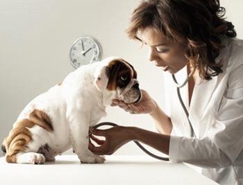 Vaccinarea animalelor - sfaturi utile