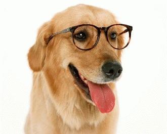 Cauzele pierderii vederii la caini