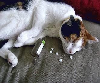 Top 10 cele mai toxice medicamente pentru animale
