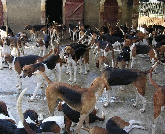 Tusea de canisa - Traheobronsita canina