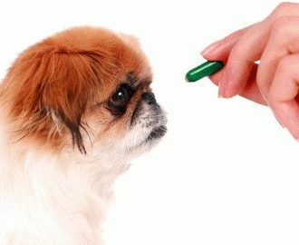 Cum administram medicamente cainelui?
