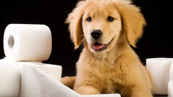 Incontinenţa urinară la câine