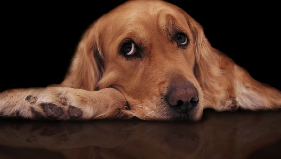 Simptomele otrăvirii la câini