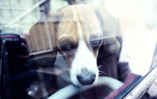 Marele pericol care îi pândeşte pe câini, în această perioadă