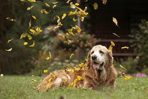 Câinele senior: la ce să te aştepţi la 10-12 ani
