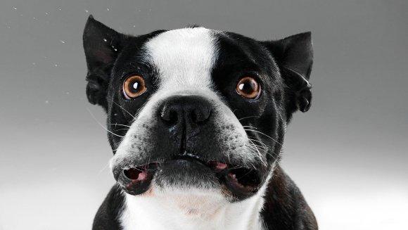 Flatulența la câini