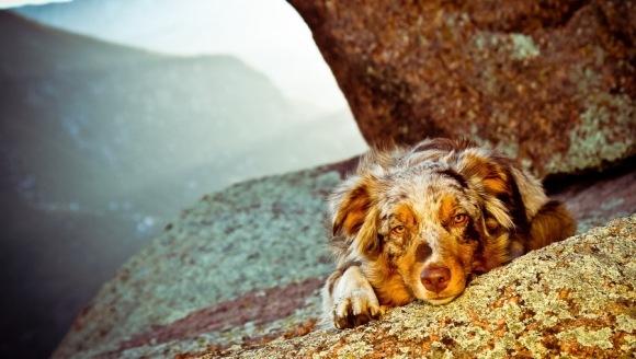 Eutanasierea animalului de companie – când e timpul să luăm decizia sfâșietoare?