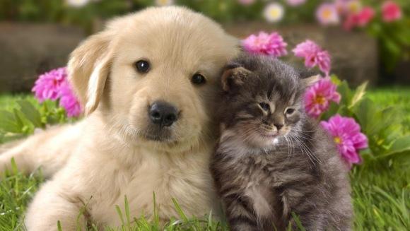 10 semnale ale diabetului la câini și pisici