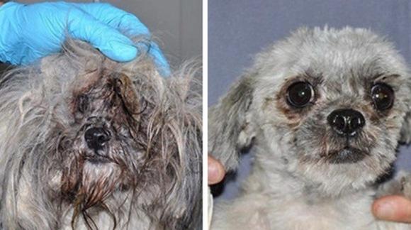 Câini ai străzii, înainte şi după… salvarea lor. 4 cazuri impresionante