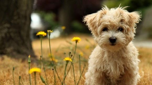 Sfaturi de care să ţii cont, dacă te gândeşti să adopţi un câine