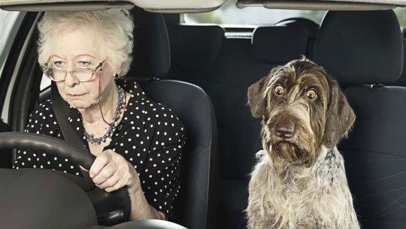 14 cele mai ciudate fobii ale câinilor – VIDEO