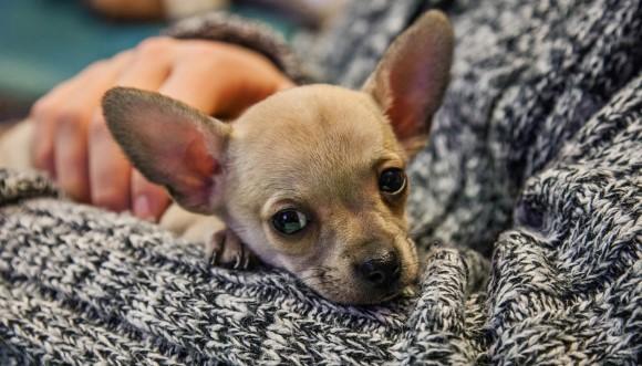 Şase lucruri pe care nu ar trebui să le faci niciodată câinelui tău