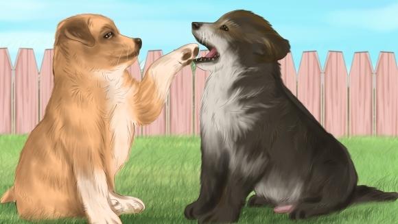 Schimbări uşoare de comportament la animalele, dar care avertizează: e nevoie de un medic veterinar! Ilustraţii