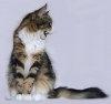 Terapia prin joaca - Leacul pentru agresiunea pisicilor