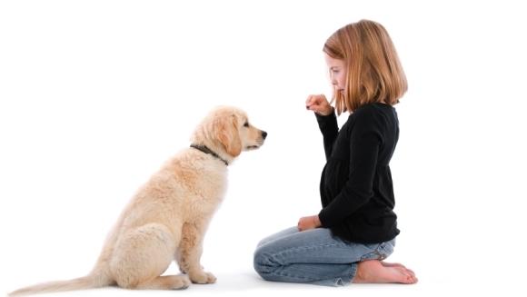 Dresaj câini: 11 paşi fundamentali