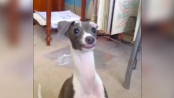 Iată ce comandă ciudată a învățat acest patruped – VIDEO