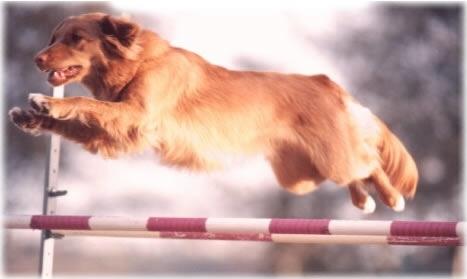 Satu Mare: DOG FOR LIFE - scoala de dresaj