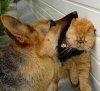 10 trucuri pentru a preveni problemele de comportament ale animalului dumneavoastra de companie