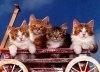 Comportamentul de dominatie in randul pisicilor