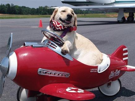 Cainele si transportul cu avionul