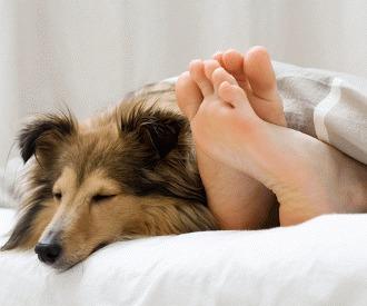 Cum dezvatam cainele sa doarma in pat?!