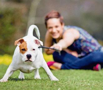 Mituri despre comportamentul cainilor (partea II)