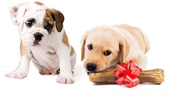 Câinii sunt capabili să resimtă gelozia