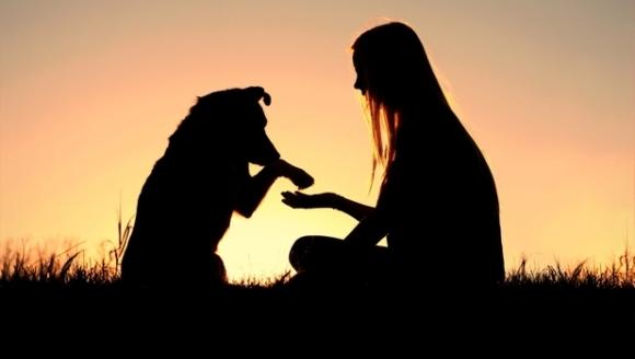 Ce-şi doresc câinii de la stăpânii lor? Un nou studiu dezvăluie preferinţele canine