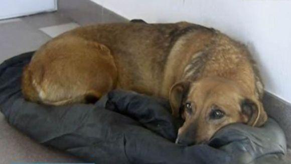 Câinele care şi-a aşteptat stăpânul timp de un an la spitalul în care acesta a murit